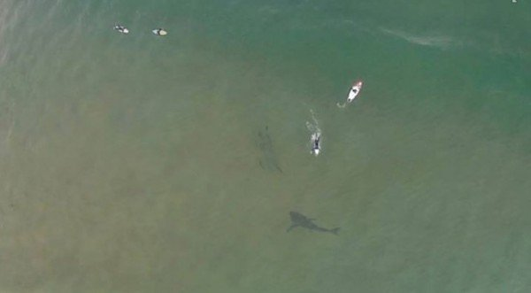 Massive shark photographed swimming near surfers at Killacare on the Central Coast